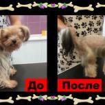 Стрижка собак и кошек, Пермь