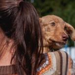 Плюшевая щенок-девочка в добрые руки, Пермь