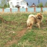 Отель для собак в Пальниках, Пермь