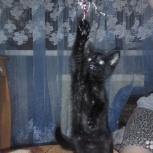 Отдам даром котёнка в хорошие руки!, Пермь