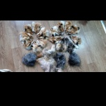Лоскут лисы в Перми, Пермь