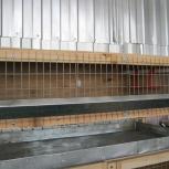 Перепелиная клетка деревянная металлическая Профи, Пермь