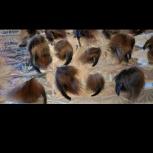 Когти лисы в Перми, Пермь