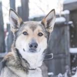 Улыбашка собака Грация, Пермь