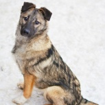 Милашка собака Амира ищет родителей, Пермь