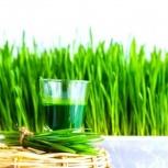 Оборудование для производства сока ростков пшеницы - Wheatgrass, Пермь