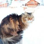Самый ласковый кот в добрые руки, Пермь