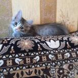 Котенок мальчик отдадим в хорошие руки, Пермь