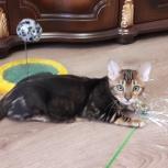 Мраморный котик ищет родителей, Пермь