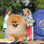 Резерв щенка шпица, Пермь