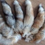 Хвосты лисы в Перми, Пермь