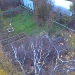 Спилить дерево,расчистить участок, кронировать, Пермь