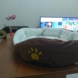 лежаки для котов, кошек и собак мелких пород, Пермь