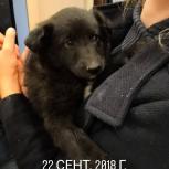 Щенок, мальчик, Пермь