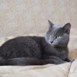 Кошечка ищет дом!, Пермь
