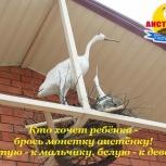 летний отдых в Крыму г.Саки, Пермь
