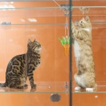 Bookingcat Гостиница для животных, Пермь