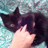 Котенок в заботливые руки, Пермь