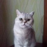 Кошечка ищет хозяина, Пермь