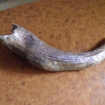 Рог ископаемый, Пермь